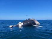 Shark warning for Port Alfred