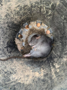 'They are going to just eat the relaxation': Ravenous rats rip into and write-off cars