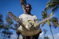AP PHOTOS: In Kenya, ex-accountant now protects sea turtles