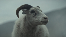 Noomi Rapace delivered real baby lambs for bonkers 'Lamb' fable about a sheep girl