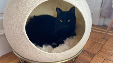14 beds your cat or dog will love sleeping in, according to pet experts